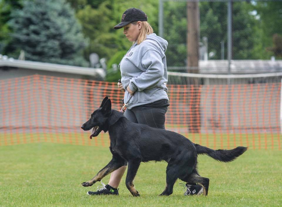 Oregon Washington Idaho German Shepherd Breeder